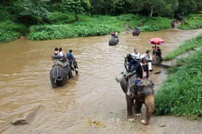 Full day Elephant Safari in Chiang Mai