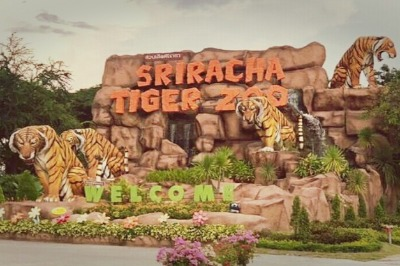 Siracha Tiger zoo with Lunch