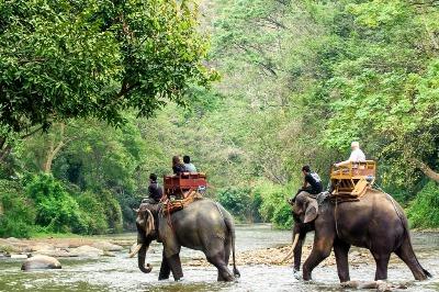 Elephant Safari Phuket Tour